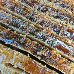#日本ミツバチ #蜂 #採蜜 #養蜂 #環境 #SDGs